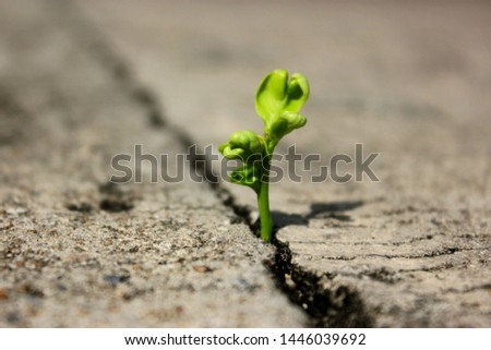 The plant that grows between the cracks of the concrete floor #1446039692
