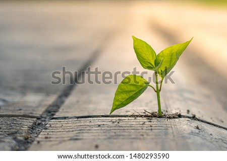 The plants grow on the cement floor with patience. #1480293590