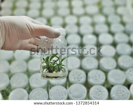 The plants in tissue culture room. tissue culture is a technique in which small tissue pieces are removed from a donor plant and cultured aseptically on a nutrient medium. #1372854314