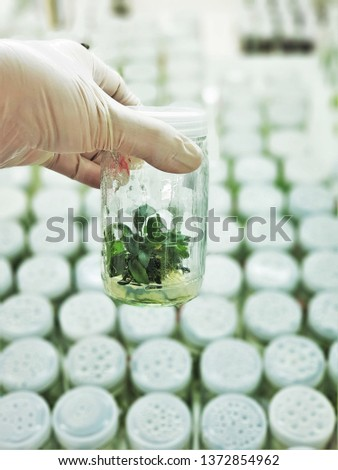 The plants in tissue culture room. tissue culture is a technique in which small tissue pieces are removed from a donor plant and cultured aseptically on a nutrient medium. #1372854962