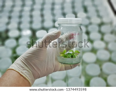 The plants in tissue culture room. tissue culture is a technique in which small tissue pieces are removed from a donor plant and cultured aseptically on a nutrient medium. #1374493598