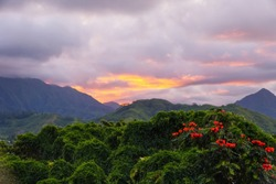 The plants, vines, and flowers of the Hawaiian rainforest glow in the sunset light. The Koolau mountain range makes a beautiful background.