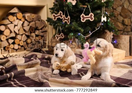 Free Photos Adorable Golden Retriever Puppy In A Santa Costume