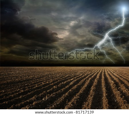 The plowed field and tree