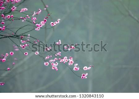 The plum blossom #1320843110