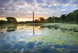 The pond at Constitution Gardens, covered with duckseed, at sunrise with cloud filled sky reflecting in the water and the Washington Monument in the background in autumn in Washington, DC.