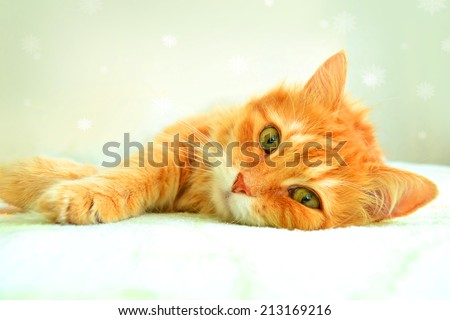 The portrait of red cat on a white background with snowflakes