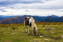 The Pottok or Pottoka s an endangered, semi-feral breed of pony, horse native to the Pyrenees of the Basque Country in France and Spain.
