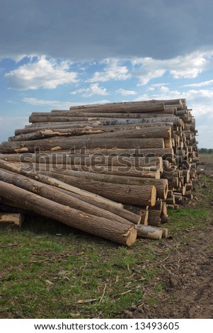 The prepared forest product for export