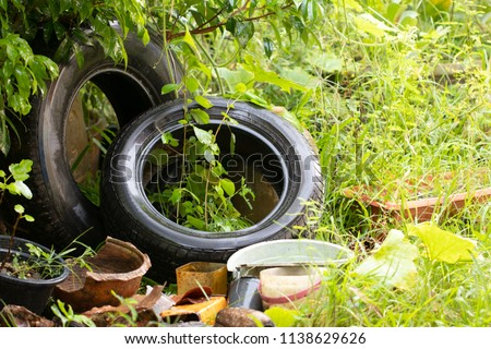 The presence of dengue vectors in discarded tires and artificial water containers in houses and peridomestic areas breeding grounds of mosquito , gnats, larvae in rain water