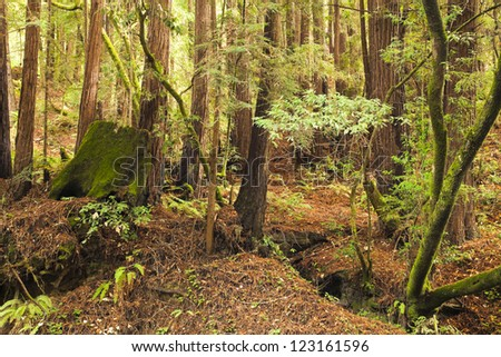 The primeval forest with mossed stump