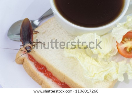The problem in the house because of cockroaches living in the kitchen.Cockroach eating whole wheat bread on white background(Isolated background). Cockroaches are carriers of the disease. #1106017268