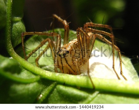 the process of laying eggs on a spider in nature life, macro photography in small world #1440419234