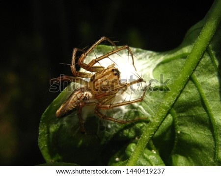 the process of laying eggs on a spider in nature life, macro photography in small world #1440419237