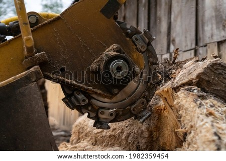 The process of removing a tree stump where the rotating head of the stump cutter grinds a freshly sawn stump.  The shredding disc is stiffened when you can see the blades splitting the stump  Foto stock ©