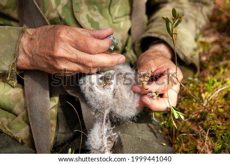 The process of ringing birds at the ornithological station. Stock photo ©