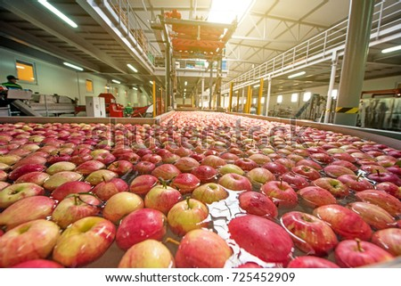The process of washing apples in a fruit production plant