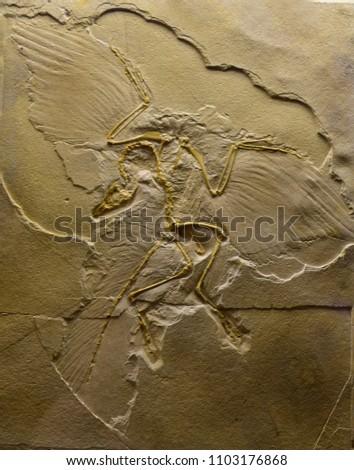 the pterosaur imprint on stone #1103176868