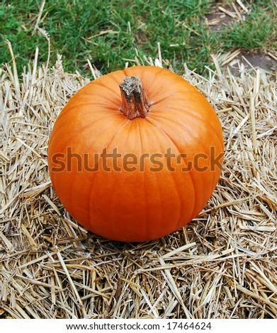 The pumpkin, close up #17464624