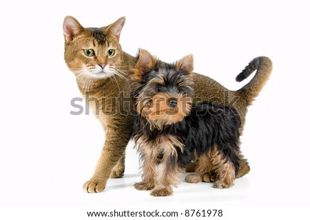 The puppy and kitten in studio
