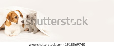 The puppy and the kitten lie under the blanket at home on the bed. Stretched horizontal panoramic image for banner