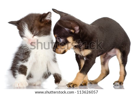 the puppy apologizes before a kitten. Isolated on a white background