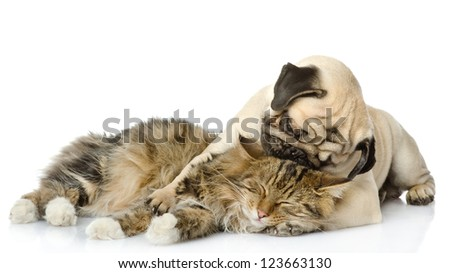 the puppy kisses a cat. isolated on white background