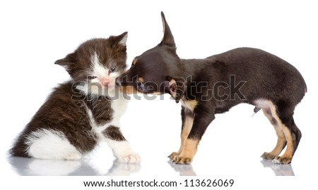 the puppy kisses a kitten. Isolated on a white background