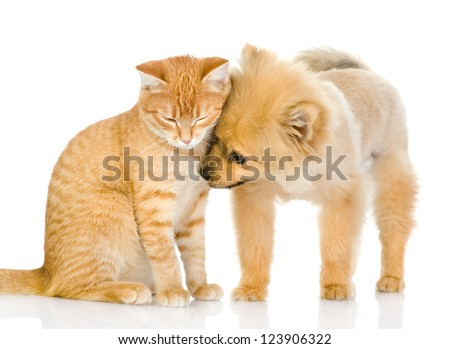the puppy licks a cat. isolated on white background