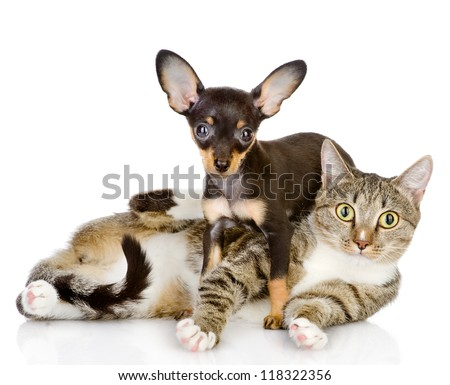 the puppy lies on a striped cat.looking at camera. isolated on white background