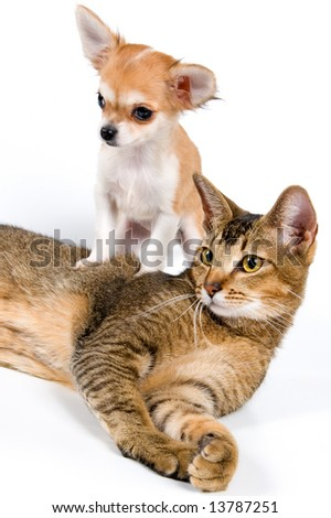 The puppy with a cat