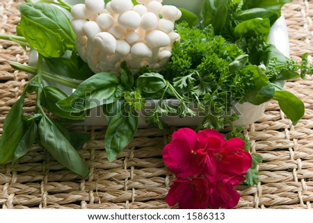 The pursuit of sensual pleasure, especially to the enjoyment of good food and comfort, a bunch of fresh enoki mushrooms, basil, parsley and flower are preparations for a healthy meal.