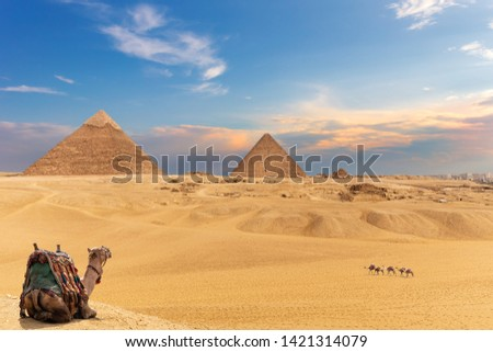 The Pyramids and camels, beautiful Giza desert view #1421314079