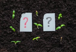 The question mark and plant. Painted question mark next to the sprouts of the plant. The concept of development