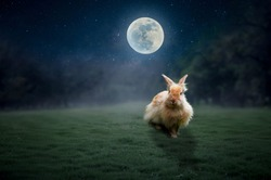 The rabbit sat in the grass on the full moon lonely.
