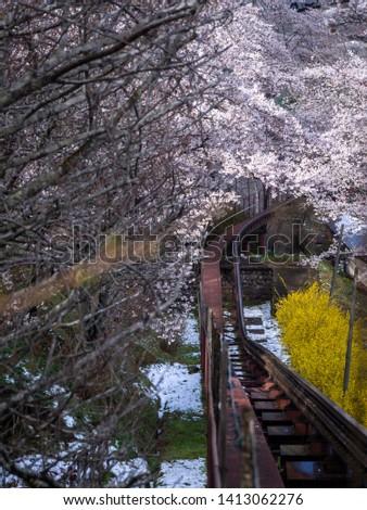 The Railroad Track Through Sakura Field in Winter Season