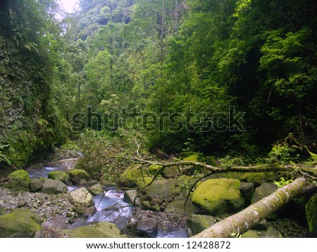 the rain forest in sibolangit camping ground , Karo, North Sumatera, Sumatra Island, Indonesia