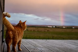 The Rainow Cat