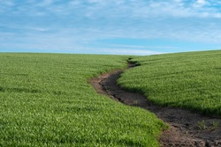 The rains have eroded the soil in the agricultural field. Formation of ravines in the field due to rainwater runoff. High quality photo