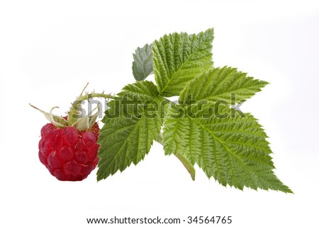 The raspberry with green sheet is isolated on the white - stock photo