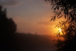 The rays of the morning sun are visible through the branches of the trees. Silhouette of plants in the rays of dawn in summer. Thickets of trees against the sun in the morning fog.