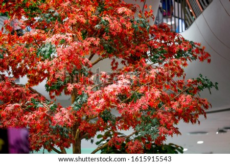 The realistic blurry background of realistic colored leaves that can be used to decorate a mall, community mall, or coffee shop for the beauty of the audience.