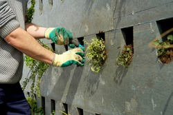 The realization of a vertical facade garden with green plants