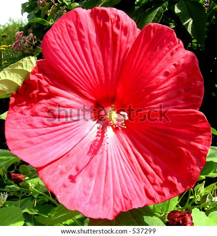 Beautiful flower names wastetime post world beautiful flower names on the red beautiful flower a big red blossom of the flower in mightylinksfo