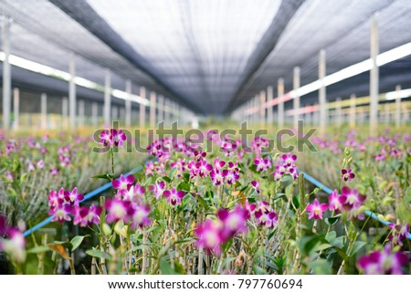 the red rattan orchids are...