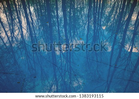 The reflection of the forest of tall trees in the blue water of the lake, the trees without leaves are reflected clearly in the water of blue #1383193115