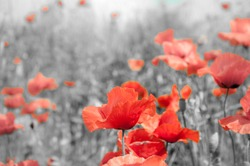 The remembrance poppy was inspired by the World War I poem