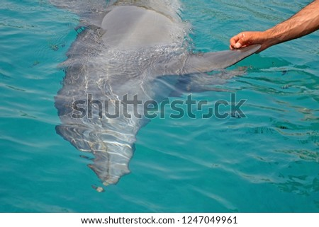 The rescued smiling dolphin holds its flippers with human hands. Sea dolphin Conservation Research Project in Eilat, Israel. saving animals, trusting and friendship people in dolphin reef. #1247049961