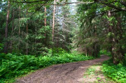 The reserved forest alogn the river Zilim on the southern Ural mountains, Bashkortostan Russia