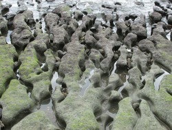 The result of ancient volcanic lava flow and erosion leaving unusual rock formations on the beach